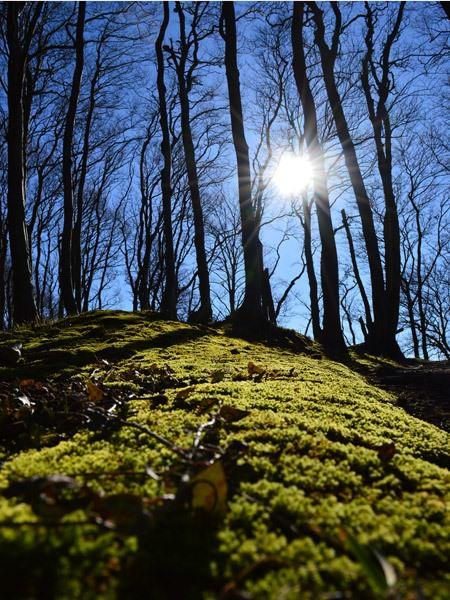 Sonnenschein über Waldgebiet von Litzow am Großen Jasmunder Bodden auf Rügen