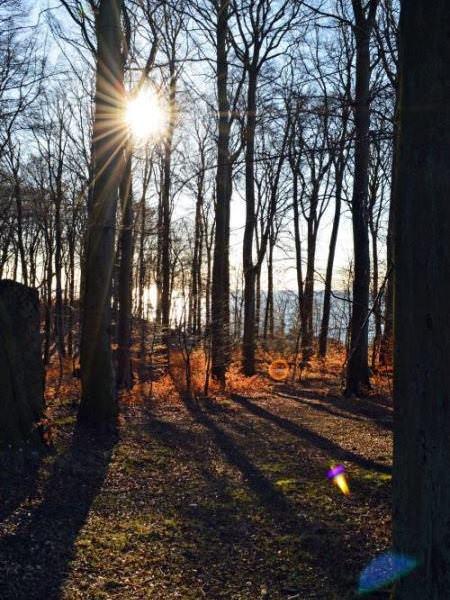 Buchenwald im Nationalpark Jasmund auf der Insel Rügen – UNESCO Weltkulturerbe an der Ostsee