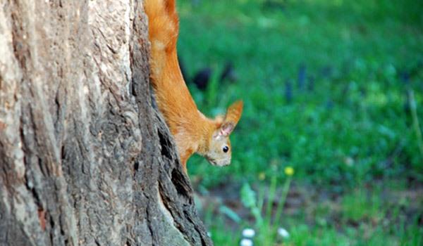 Eichhörnchen im Biosphärenreservat-Südost-Rügen – Tiere im Naturschutzgebiet auf Deutschlands größter Insel